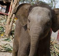 Ayutthaya Elephant Palace