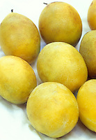 Plum 'Shiro' (Prunus) clingstone plum, stone fruits, harvested