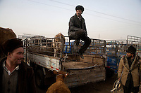 Uighur men gather around trucks at the Kashgar Sunday Animal Market outside Kashgar, Xinjiang, China.