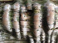 Driftwood Abstract, Tumbo Island, Gulf Islands National Park Reserve, British Columbia, Canada