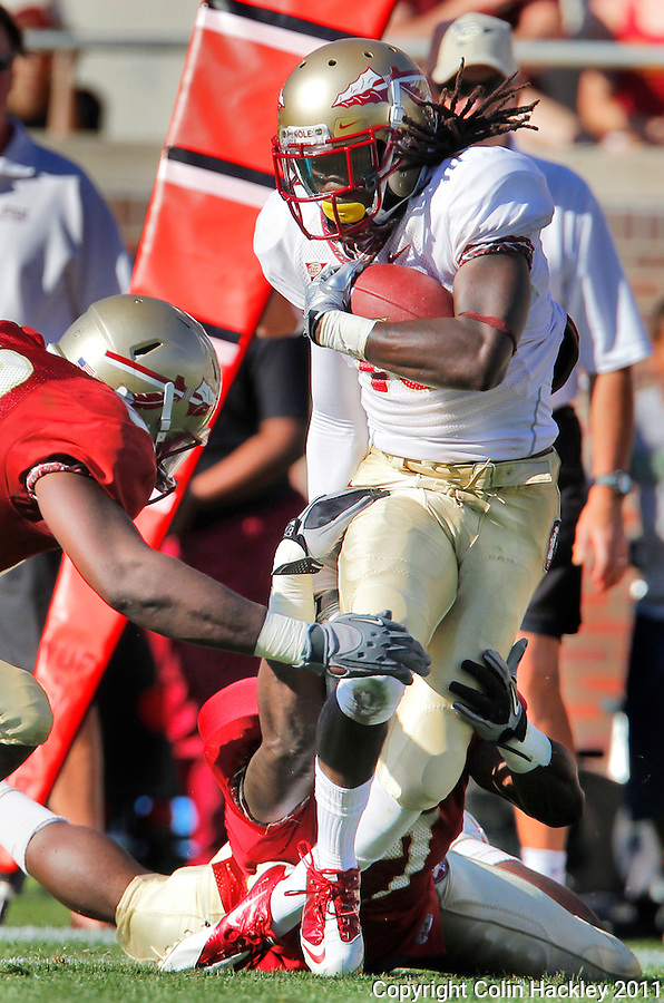 TALLAHASSEE, FLA. 4/16/11-FSUG&G041611 CH-Garnet's Dan Hicks, left, and Christian Jones tackle Gold's Greg Dent during second half action in  the Florida State University Garnet and Gold game Saturday in Tallahassee. The Garnet beat the Gold 19-17..COLIN HACKLEY PHOTO