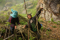 The bamboo ladder is to be hoisted up. Much farther off, Shimbu, the son of the Perengge, has selected an observation post from which he will be able to give instructions to the assistants at the top of the cliff, who must move the harvest basket without being able to see it.