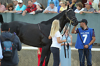 HOT SPRINGS, AR - APRIL 15: Sonneteer before the Arkansas Derby at Oaklawn Park on April 15, 2017 in Hot Springs, Arkansas. (Photo by Justin Manning/Eclipse Sportswire/Getty Images)