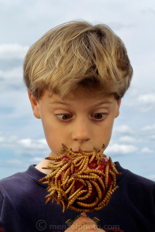 Eric Pihl, 8, of Napa, California, is amazed to see a candied apple covered with dried meal worms from Hotlix Candy Factory, Pismo Beach, California. Image from the book project Man Eating Bugs: The Art and Science of Eating Insects.
