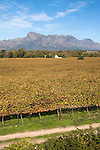 Franschoek, Cape winelands, Western Cape, South Africa