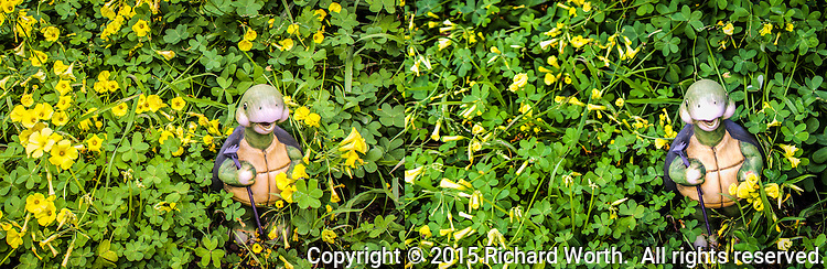 Like a run on sentence, this run on diptych starts in the afternoon with bright yellow oxalis blooms, then runs headlong into late afternoon with a fading sun and tightly closed blossoms, waiting till the sun returns.