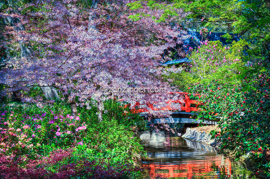 Descanso Gardens, La Canada, CA, Japanese Tea House, Bridge, mixed, flora, botanic, colorful, blooming, spring