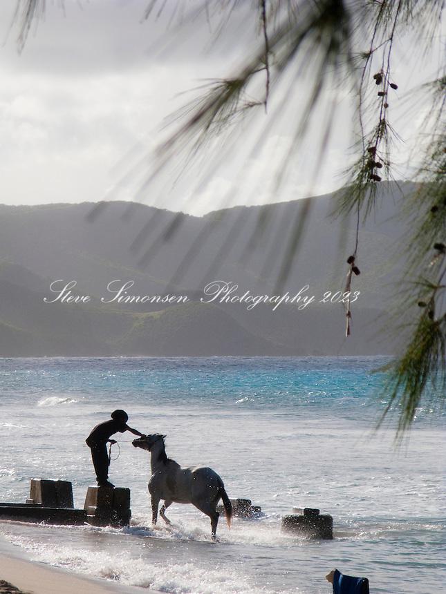 Washing down his horse in the ocean<br /> St. Croix<br /> U.S. Virgin Islands