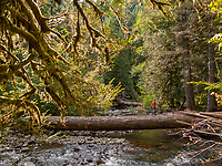 Hiker crossing the salmon River near Welches Oregon in the Mt Hood National Forest