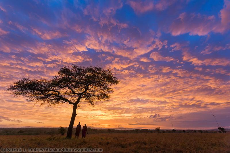 Two Masai tribesman at dawn on the African savannah by an umbrella acacia tree, Masai Mara, Kenya, Africa