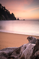 Driftwood on golden beach in Totaranui at sunrise, Abel Tasman National Park, Nelson Region, New Zealand