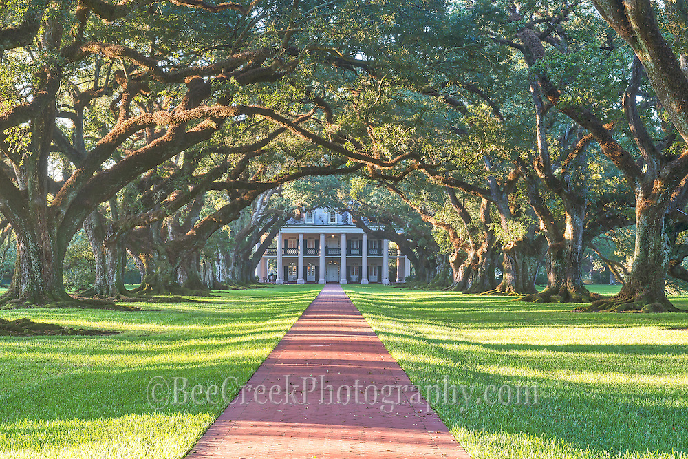 This is another image of Oak Alleys 300 year old trees as the morning light crosses the path to the mansion.