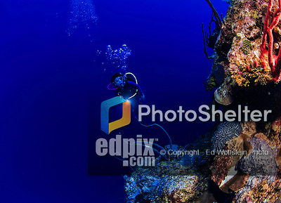22 July 2015: SCUBA Diver Sally Herschorn explores the reef at Lemon Wall, at Little Sound, on the North Shore of Grand Cayman Island. Located in the British West Indies in the Caribbean, the Cayman Islands are renowned for excellent scuba diving, snorkeling, beaches and banking.  Mandatory Credit: Ed Wolfstein Photo *** RAW (NEF) Image File Available ***