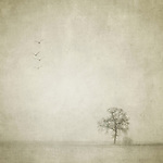 A lonely tree and four birds flying away in an empty and strange landscape