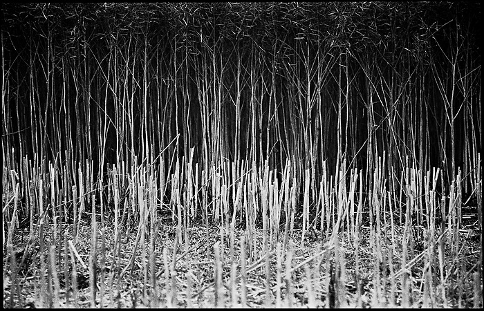 Straw Stubble, Occold, Suffolk, 2011