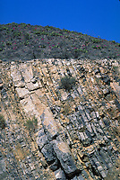 Steeply tilted beds of Maravillas Limestone and overlying terrain in road cut. Texas, Big Bend National Park.