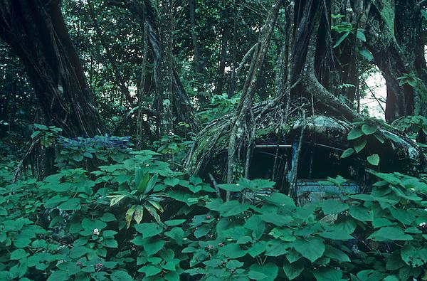 Banyan Tree growing over abandoned car, Keaau, Hawaii, USA.