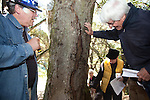 Schmidt and workshop participants examine the infected tree to be better able to identify the disease in their own yards and other areas of the community.