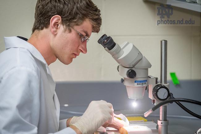 Jul. 30, 2015; Clay Becker, undergraduate researcher in the Hyde lab, summer 2015. (Photo by Matt Cashore/University of Notre Dame)