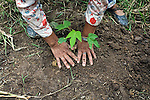 Bolivia. Copacobana. planting papaya seedingls near to the Copacobana community area.