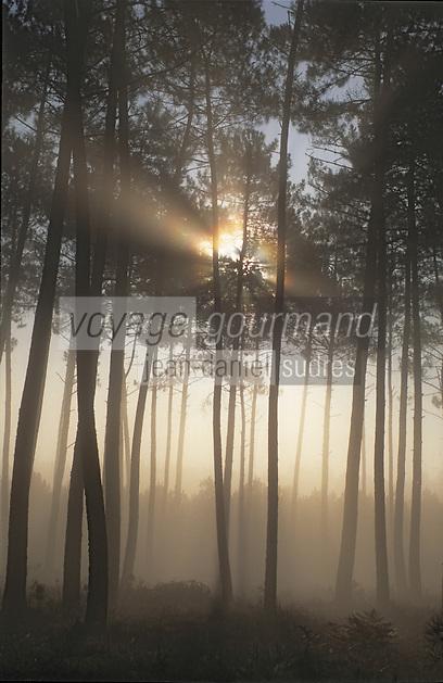 Europe/France/Aquitaine/50/Landes/Env Sabres: Brumes sur la forêt landaise