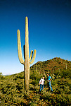 Arizona, Tucson: near Tanque Verde Ranch, Photo: ranchs103  .Photo copyright Lee Foster, www.fostertravel.com, 510/549-2202, lee@fostertravel.com
