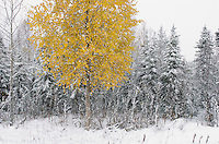 Alaska Weather