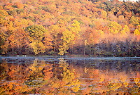 TREES REFLECTED IN LAKE: FALL FOLIAGE
