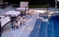 A custom 9 inch Hex border shown in Nero Marquina honed, Statuary Carrara honed, and Socorro Gray, is shown here in a custom pool installation.<br />