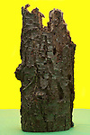 old broken wood piece of a tree trunk