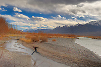 A young boy jumping over a stream of water....Taken near Thiksey village on the bank of Sindhu River in Ladakh...