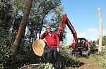 Foto: VidiPhoto<br /> <br /> SCHIJNDEL  - Boomrooier Kees Weijtmans van Boomrooijerij Weijtmans bij rooiwerkzaamheden van populieren in Schijndel.