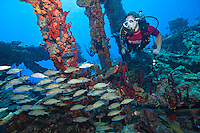 Savanna Goodman<br />