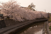 Cherry blossoms (sakura) growing near the former site of a small castle over looking a canal in Japan.