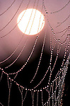 Spider Webs