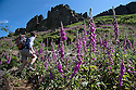 2015_07_15_foxgloves