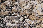 Rock patterns, Sabino Canyon Recreation Area, Arizona