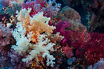 Biodiversity of Red Sea...