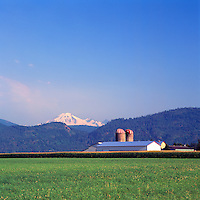 Fraser Valley, Southwestern BC, British Columbia, Canada - Farm Buildings, Corn Field, Cascade Mountains, and Mt Baker USA in Distance