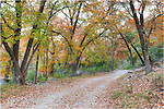 While in the Texas Hill Country, take a stroll through Lost Maples State Park near Vanderpool, Texas. Each November, the maples start to change from green to red, creating a beautiful canopy to enjoy.