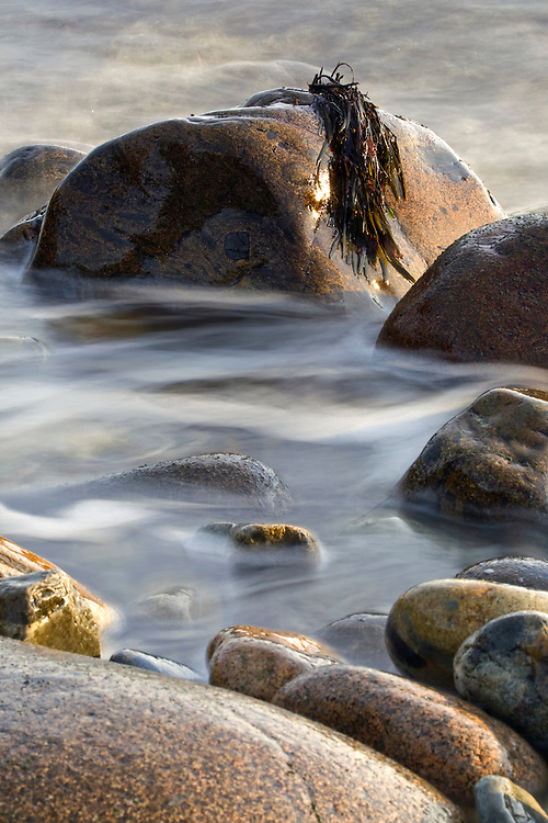 Seaweed draped over cobble at Little Hunter's Beach in Acadia National Park, Maine