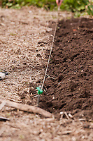 A string is used to define a straight edge of the compost-rich soil of a garden bed in a vegetable kitchen garden.