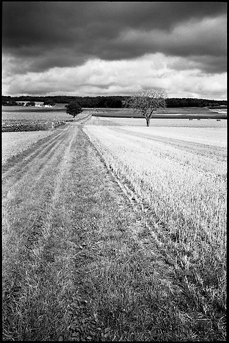 Crop Field, Couziers, Loire Valley, France by Paul Cooklin