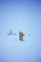 """Fire hydrant at the end of the road, on the Prairies, after a snowstorm near St. Albert, Alberta, """"Last Chance"""" for canine pal."""