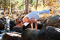 Adult woman in the yoga pose  Eka Pada Koundinyasana I outdoors in a wooded creek.