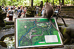 Monkey Forest, Ubud, Bali, Indonesia; a crab-eating macaque (Macaca fascicularis) monkey sits on top of a map of the sanctuary
