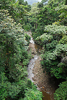 The canopy and a stream in the  rainforest of the Danum Valley Conservation Area, Sabah, Borneo, Malaysia