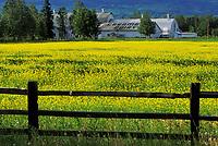Creamer's dairy, historic old dairy farm, now a migratory waterfowl refuge, Fairbanks, Alaska
