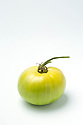 WA11125-00...WASHINGTON - Green tomato.