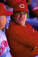 SAN FRANCISCO, CA - Manager Pete Rose of the Cincinnati Reds watches the game from the dugout during a game against the San Francisco Giants at Candlestick Park in San Francisco, California in 1987. Photo by Brad Mangin